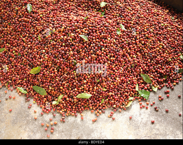 Pile Of Coffee Beans - Stock Image