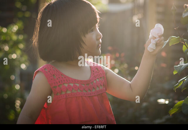 Australia, Melbourne, Young girl with rose petals in hand - Stock Image
