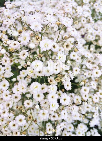 White flower blooms - Stock Image