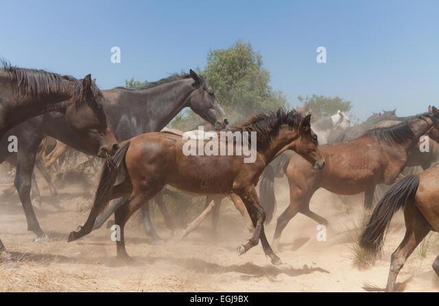 wild horses running free stock photos amp wild horses