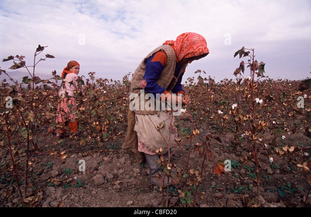 Young Tajik girls picking cotton along Tajikistan highway A385 100km southeast of Dushanbe. - Stock Image