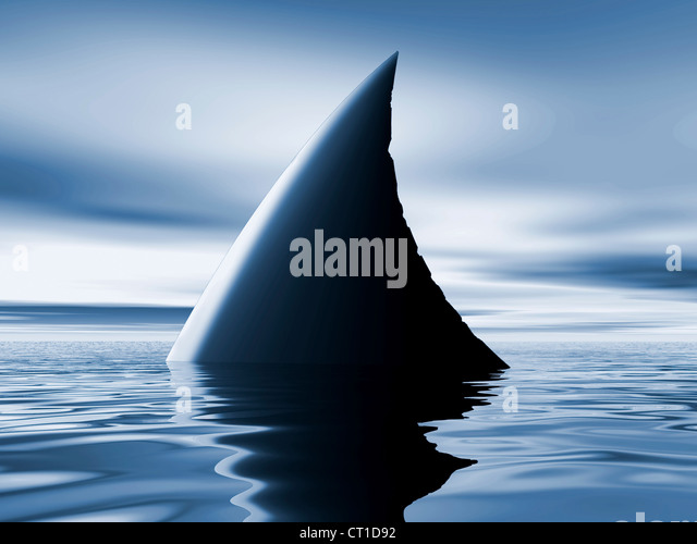 sharks fin on the surface of calm blue sea - Stock Image