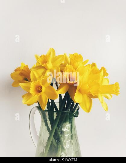 Daffodils in a green glass vase against a plain background - Stock Image