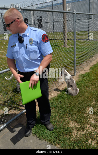 Prison officer working kennel area. Inmates train shelter dogs that are then put up for adoption to the public. - Stock Image