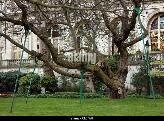 Wooden poles supporting the branches of a very old tree on the Embankment, London, England - Stock Image