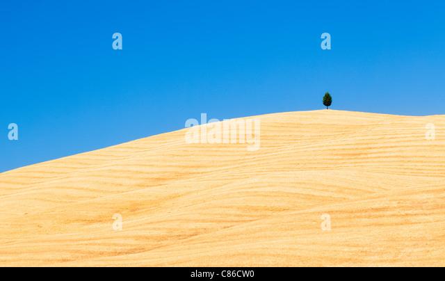 Tuscany - Single tree on hillside near Pienza - Stock Image