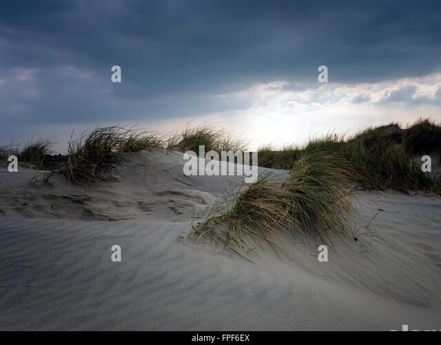 Sand dunes at East Head, West Wittering, West Sussex - Stock Image