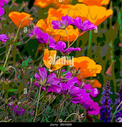 MIXED BORDER WITH ESCHSCHOLZIA CALIFORNICA AND GERANIUM MANIPULATED - Stock Image