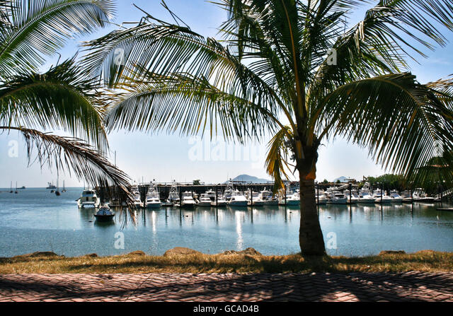 Coconut trees by a marina and causeway in Panama. - Stock Image