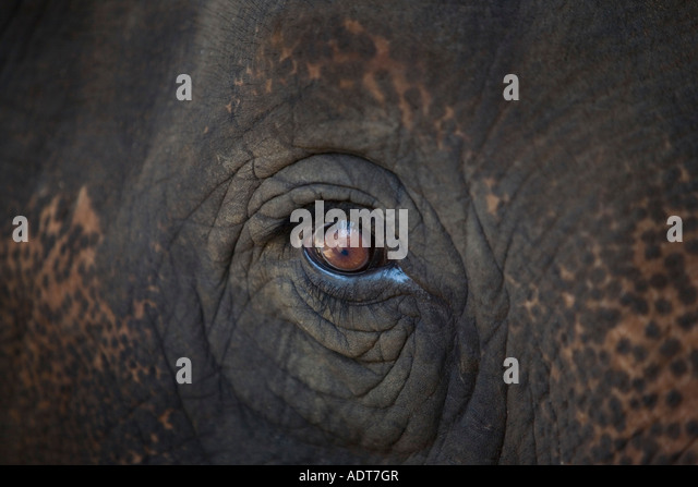 Closeup of an animal's eye - Stock Image