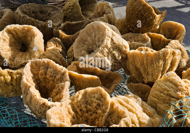 Sponges stock photos sponges stock images alamy for Bloody bay wall mural