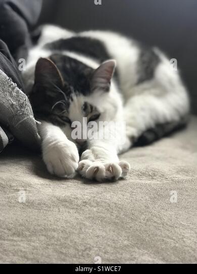 Cat purring - Stock Image