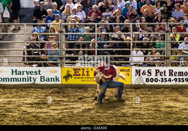 Steer wrestling event at the rodeo, Cowtown, New Jersey, USA - Stock Image