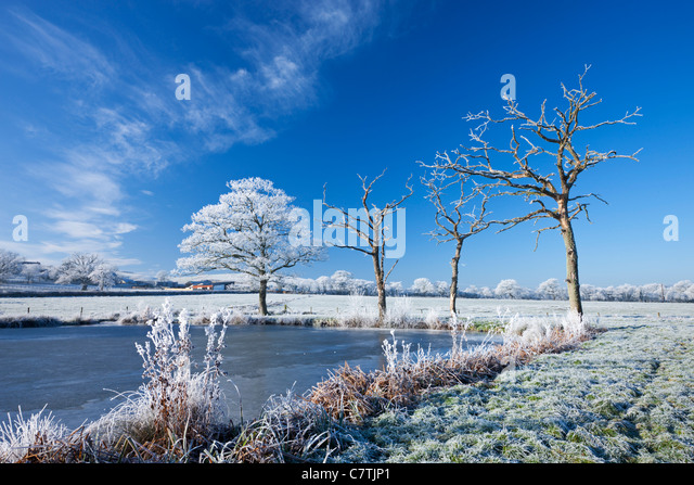 Hoar Frosted trees and frozen lake in winter time, Morchard Road, Mid Devon, England. Winter (December) 2010. - Stock Image