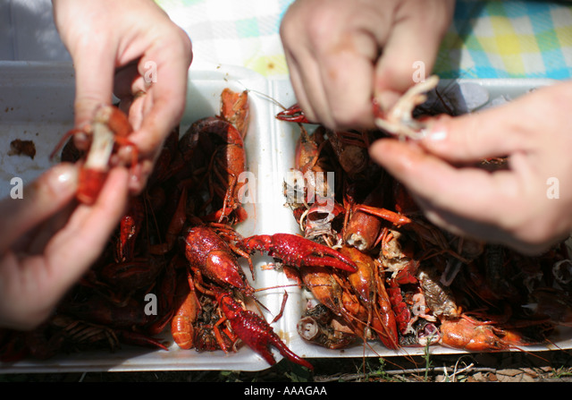 Florida, Zydeco Festival, Cajun food, crawfish, crayfish, crawdaddy, - Stock Image