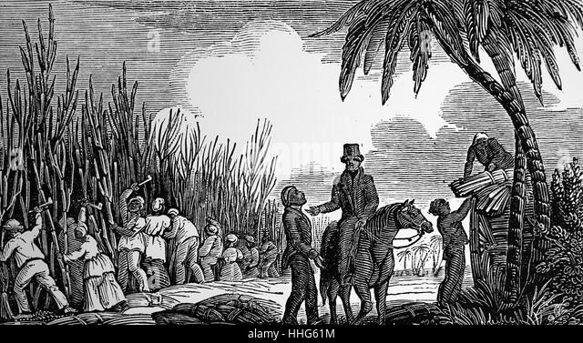 Cutting sugar cane in the West Indies, 1833. - Stock Image