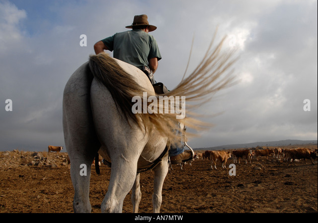 An Israeli cattle herder wearing a pistol mounted on a horse in the Golan heights northern Israel - Stock Image