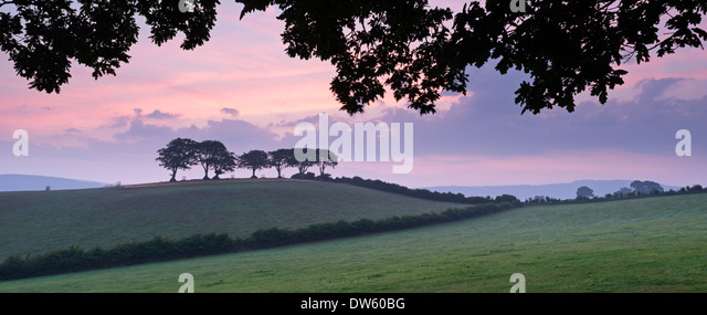 Rolling Exmoor countryside and trees at dawn, Luccombe, Exmoor, Somerset, England. Summer (August) 2013. - Stock Image