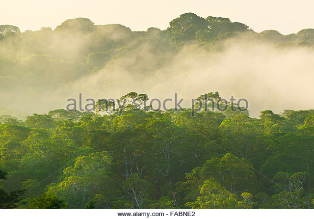 Misty rain forest at sunrise in Punta Patino nature reserve, Pacific coast, Darien province, Republic of Panama. - Stock-Bilder