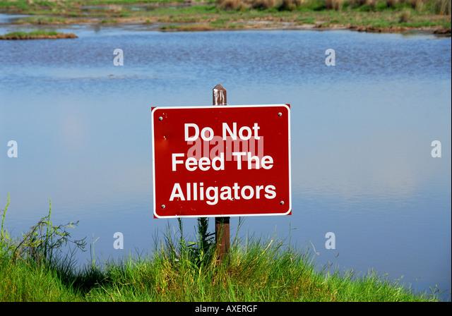 alligator warning sign do not feed the alligators Florida - Stock Image