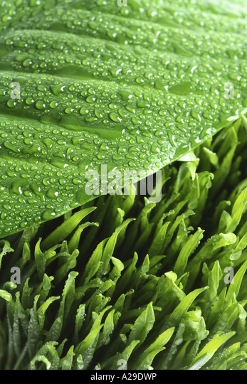 Grass and Wet Tropical Leaf - Stock Image
