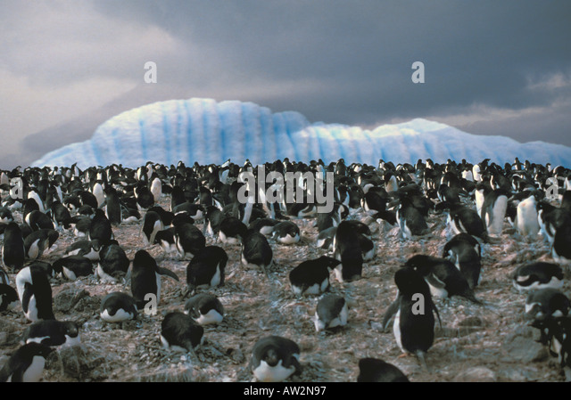 ANTARCTICA Penguins with Iceberg in background - Stock Image
