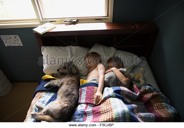 Dog and brothers sleeping a row bed - Stock Image