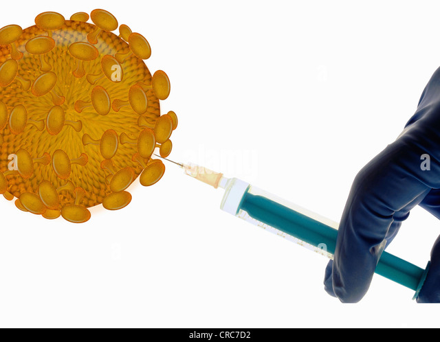 Scientist injecting fluid into spores - Stock Image