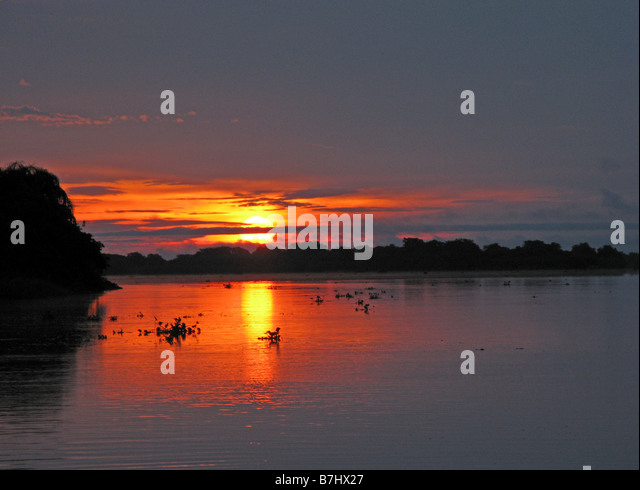 Sunset on Congo River with clumps of water hyacinth floating Democratic Republic of Congo - Stock-Bilder