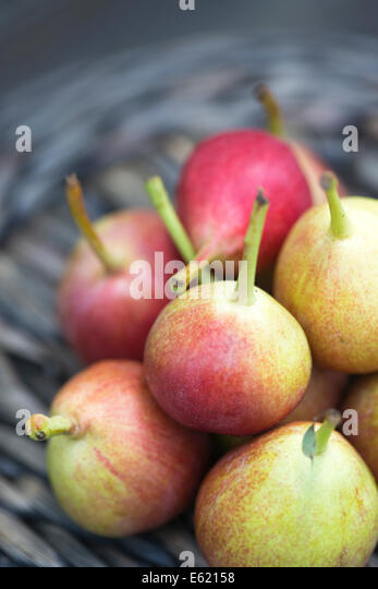 miniature Mallorcan grown pears on woven basket against outdoors wood bench - Stock Image