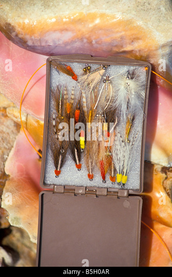 bonefishing salt water fly fishing tackle bonefish flies lures displayed on queen conch shells - Stock Image