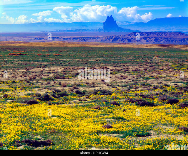 Autumn sunflowers at Shiprock, Navajo Reservation, New Mexico, Giant Butte 1400 feet above the desert floor, eroded - Stock-Bilder