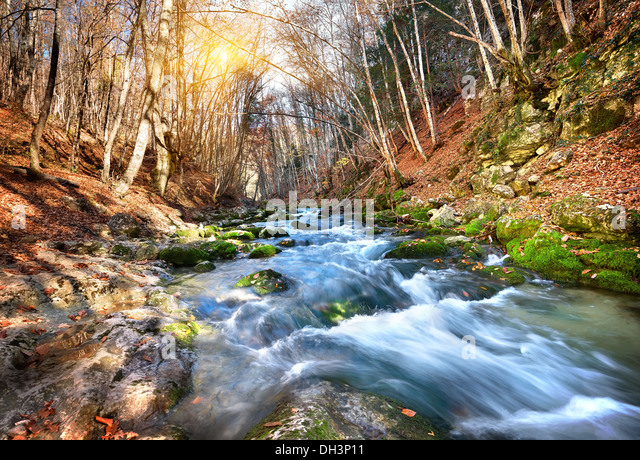 Fast river in a mountain forest on a sunny day - Stock Image