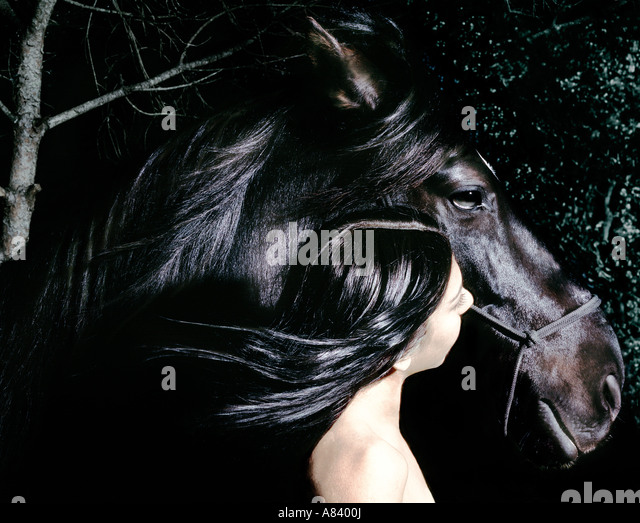 horse - Stock-Bilder