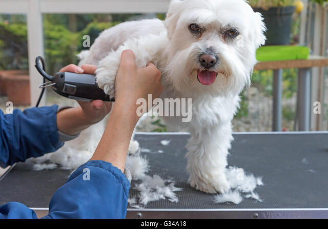 Aries Dog Grooming