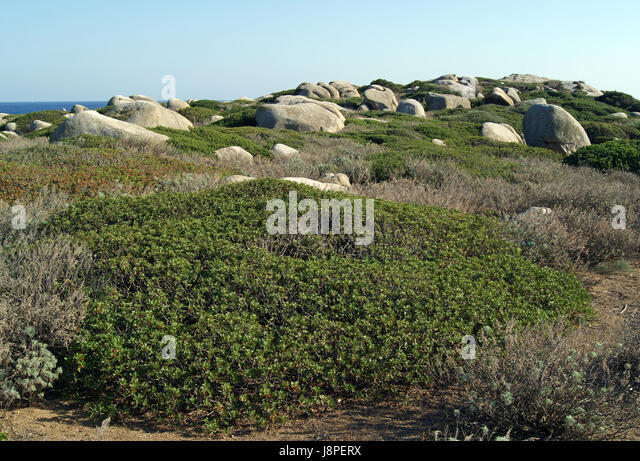Maquis Stock Photos Maquis Stock Images Alamy