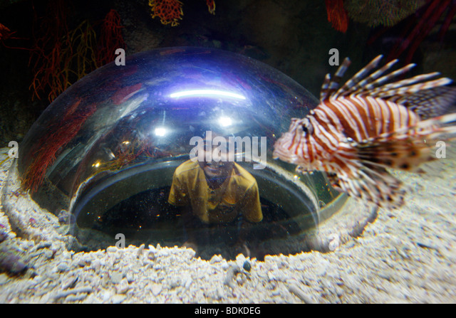 Dubai Aquarium and underwater Zoo, part of Dubai Mall in Downtown Dubai, new part of the city, Dubai, United Arab - Stock Image