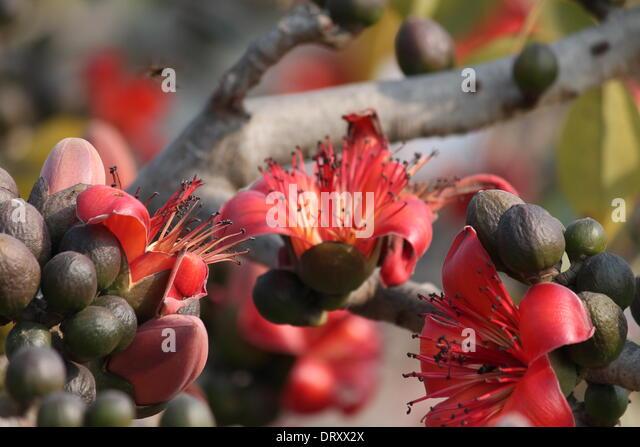 Basontasav stock photos basontasav stock images alamy for Flowers in season in february