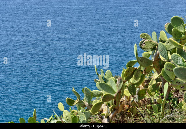 Cactus plants damaged by tourists on Spanish coas - Stock Image