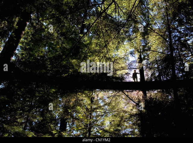 Girl in woodland by lake, Vancouver, Canada - Stock Image