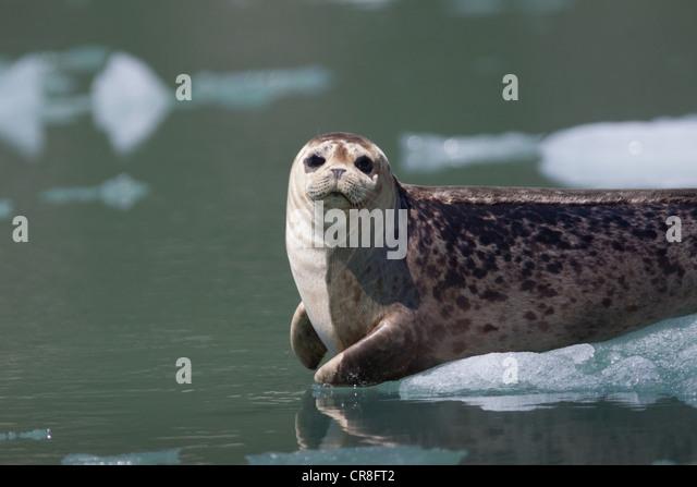Wildlife near Tracy Arm Glacier - Stock-Bilder