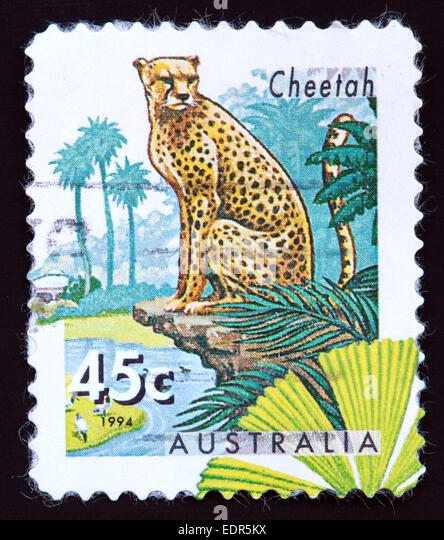 Used and postmarked Australia / Austrailian Stamp 45c 1994 Cheetah - Stock Image