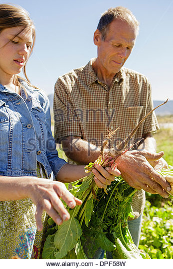 Father and daughter farmers checking crops - Stock Image