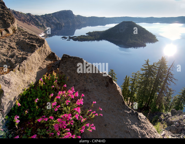 Penstemon growing on edge of Crater Lake. Crater Lake National Park, Oregon - Stock Image