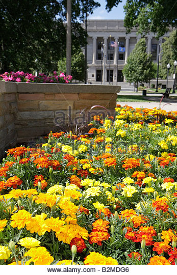 Wisconsin Kenosha Civic Center Park flower bed yellow orange mums garden planter town square - Stock Image