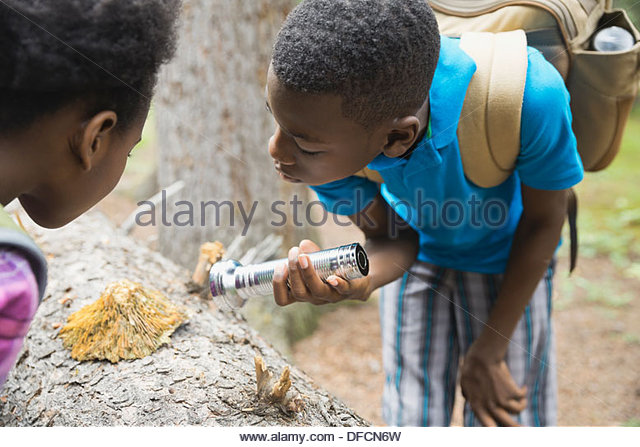 Siblings exploring fungus on tree trunk in forest - Stock Image