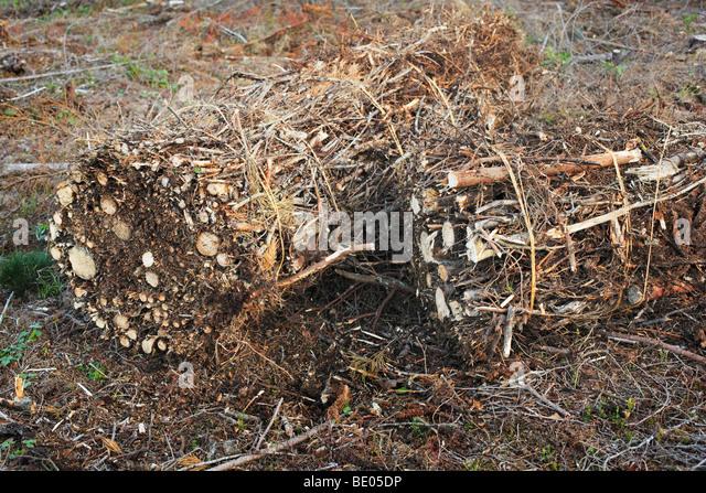 Slash bundle used for biomass fuel - Stock Image