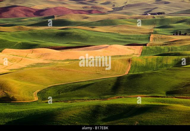 Palouse fields, Whitman County, Washington, USA - Stock Image