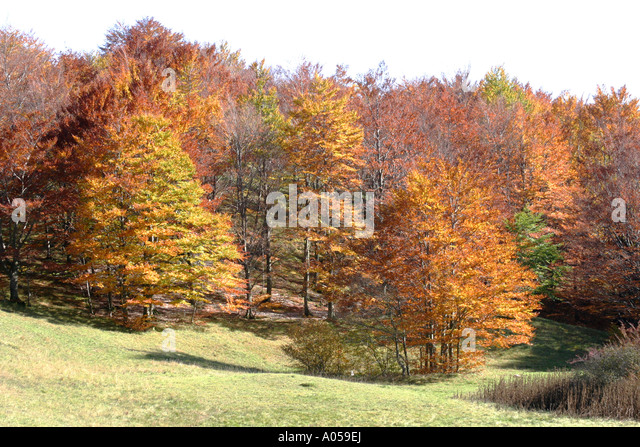 Beautiful fall/ Autumn colors of the trees in the Sibillini National Park,Le Marche ,Italy - Stock Image