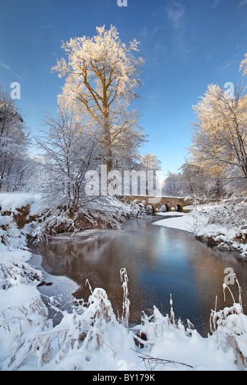 Minnowburn Beeches in Heavy snow. Co Antrim, Northern Ireland. - Stock-Bilder